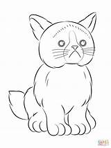 Coloring Cat Grumpy Webkinz Pages Printable Colouring Drawing Soon Well Isaac Grump Children Spa Themed Template Popular Categories sketch template
