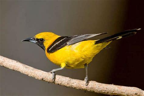 arizona pictures   photography bird