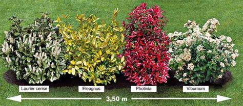 haie feuillage persistant photo la plantes jardins haie persistant et arbuste