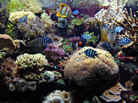 sauerstoffpumpe für aquarium die 54 besten aquarium hintergrundbilder