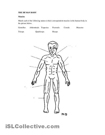 17 Best Images Of Human Muscle Worksheets  Label Muscles Worksheet, Blank Head And Neck Muscles