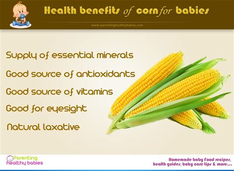 Corn For Babies Infographic