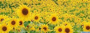flowers sunflowers 10 Facebook Cover timeline photo banner ...