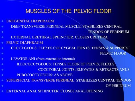 Muscles Of The Pelvic Floor Ppt by Ppt Presentation Created By Alfonso A Pino Md