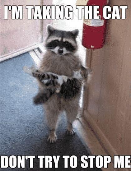 Best Animal Memes - memes this blog rules why go elsewhere