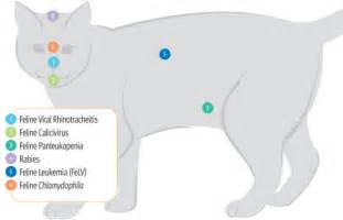 symptoms of rabies in cats feline diseases vaccinations cat rabies symptoms and