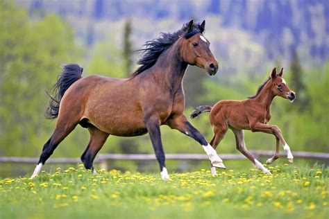 foal hd wallpapers background images wallpaper abyss