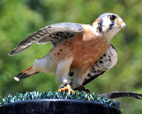 toronto grand prix tourist a toronto blog birds of prey