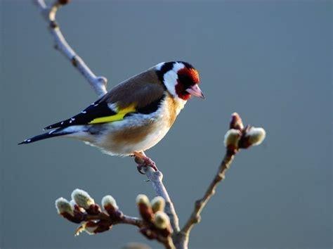 aidez les oiseaux 192 passer l hiver bois et poterie le