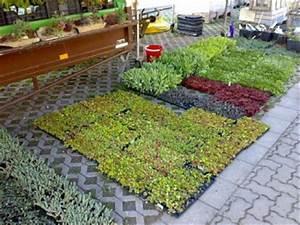 Extensive Dachbegrünung Pflanzen : dachbegr nung flachdach fachdachbegr nung bauen ~ Frokenaadalensverden.com Haus und Dekorationen