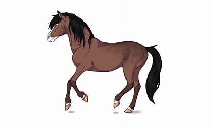 Horse Run Kamy Jorvikipedia Cause Wikia Them