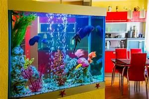 Aquarium Als Raumteiler : aquarienfische in hamburg ~ Michelbontemps.com Haus und Dekorationen