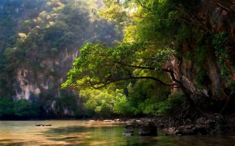 nature landscape trees mountain river sunlight roots