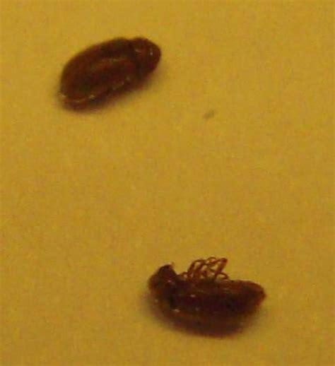 insectes cuisine petites betes dans la maison 28 images insectes de