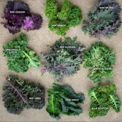 Kale Greens Different Types