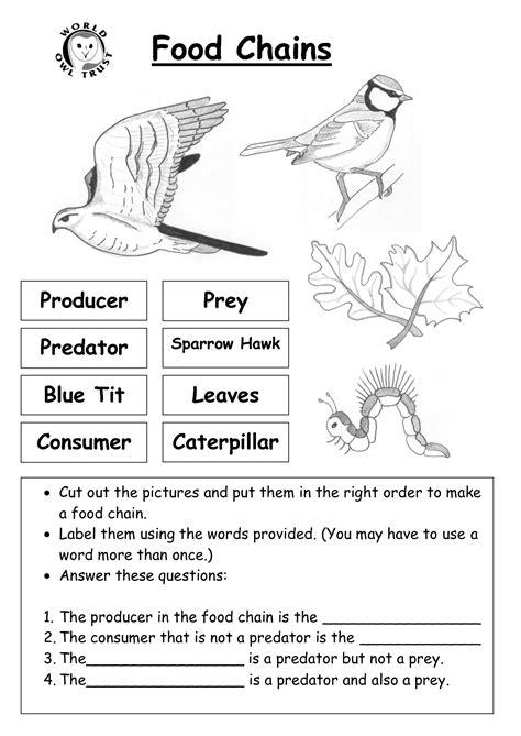 images  worksheets food chain web pyramid food