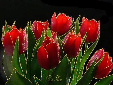 Tulips Animated Gifs