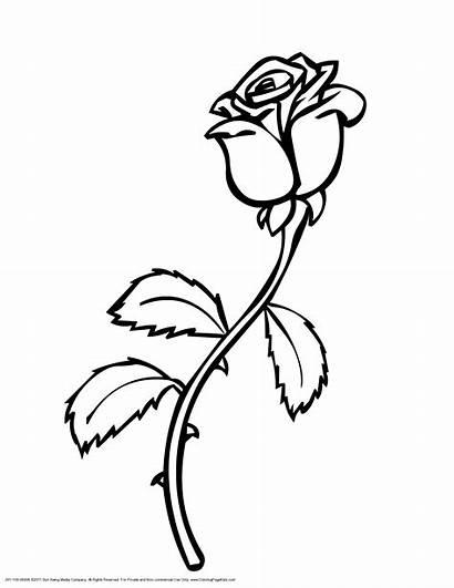 Rose Single Printable Clipartpanda Clipart Roses Coloring
