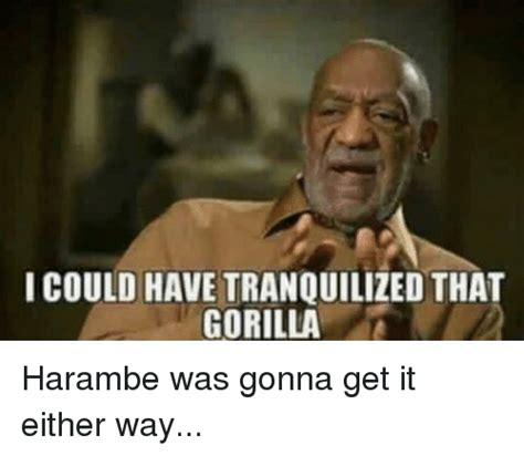 Funny Harambe Memes - funny harambe memes of 2017 on sizzle dank