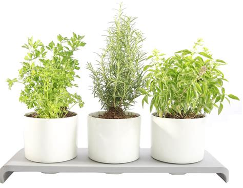 u herb indoor garden contemporary indoor pots and