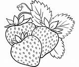 Coloring Berries Berry Fruits Vegetables Printable Onion Strawberry sketch template