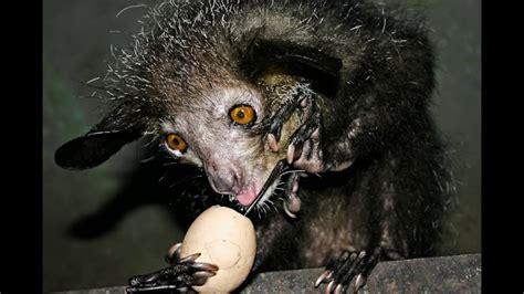 Top 10 Nature's weirdest most curios and ugliest Animals