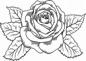 Blumen Zum Ausdrucken : blumen 2 ausmalbilder malvorlagen ~ Watch28wear.com Haus und Dekorationen