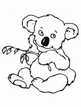 Koala Coloring Pages Cute Bear Drawing Realistic Face Baby Animal Getdrawings Printable Print Gigantic Getcolorings Clipartmag Koa sketch template