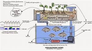 Getting Started With Aquaponics  Cycling Your Fish Tank
