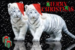 merry christmas tiger picture 103191314 blingee com
