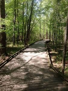 Suwanee Greenway Trail