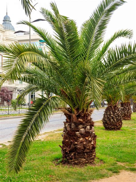 Small Palm Trees - Learn About Different Types Of ...