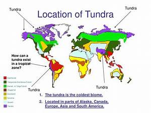 Ppt Tundra Terrestrial Biome Powerpoint Presentation