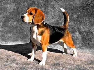 Taille Moyenne Bébé : chien de garde taille moyenne youtube ~ Nature-et-papiers.com Idées de Décoration