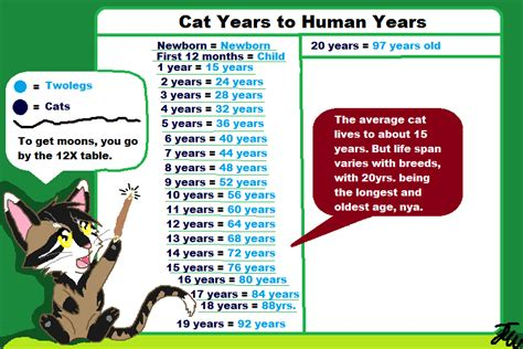 Cat Years To Human Years  Cat Forums