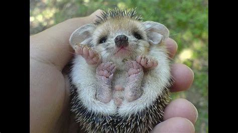 cute baby animals pictures youtube