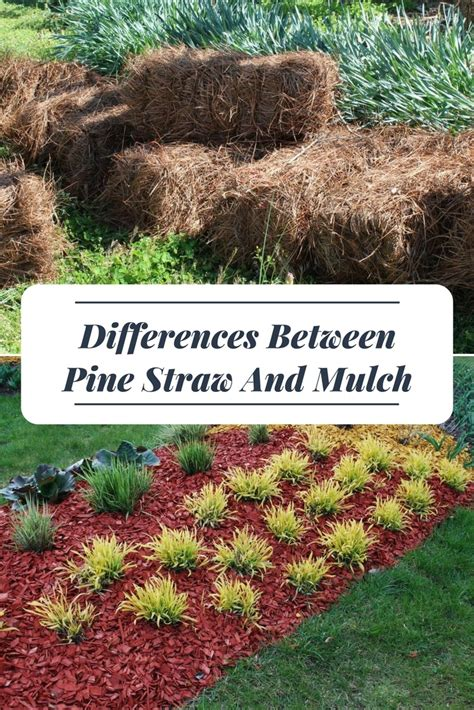 what can i use instead of mulch differences between pine straw and mulch a green hand
