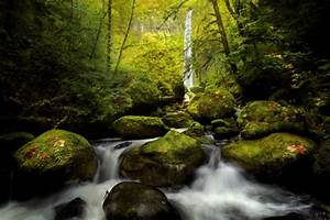 Elowah, Falls, Columbia, River, Moss, River, Forest, Wallpapers, Hd, Desktop, And, Mobile, Backgrounds