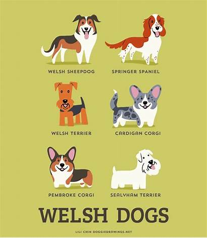 Dogs Dog Lili Chin Breeds Posters Origins