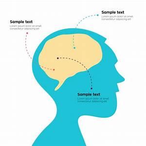 Diagram Of Head Profile Illustrations  Royalty
