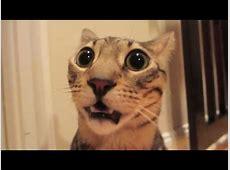 Lustige Tiere Furtzen Lustige Videos YouTube