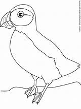 Puffin Coloring Pages Macareux Colouring Oiseau Puffins Coloriage Oiseaux Printables Lightupyourbrain sketch template