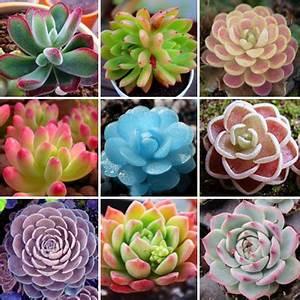 Mini Cactus Plants Reviews - Online Shopping Mini Cactus ...