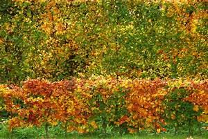 Baum Pflanzen Anleitung : wann buchenhecke pflanzen baum pflanzen anleitung b ume richtig pflanzen eine anleitung baum ~ Frokenaadalensverden.com Haus und Dekorationen
