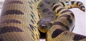 Venusfliegenfalle Pflege Haltung : die anakonda im terrarium mikes hobby blog ~ Watch28wear.com Haus und Dekorationen