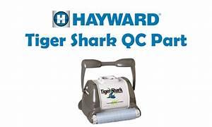 Tiger Shark Quick Clean : buy hayward tigershark qc 115v for u s quick clean power ~ Dailycaller-alerts.com Idées de Décoration