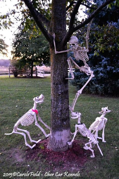 cat trees for large cats skeleton decorations get the best tips