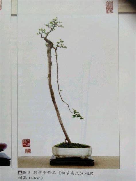 bonsai serut dongkelan cirebon home facebook