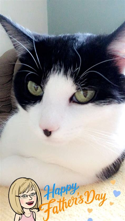 cat tuxedo nosy names cats named father saying