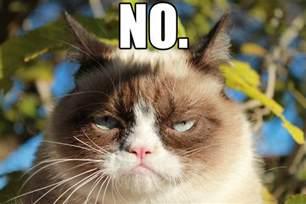 grumpy cat pictures grumpy cat no grumpy cat your meme